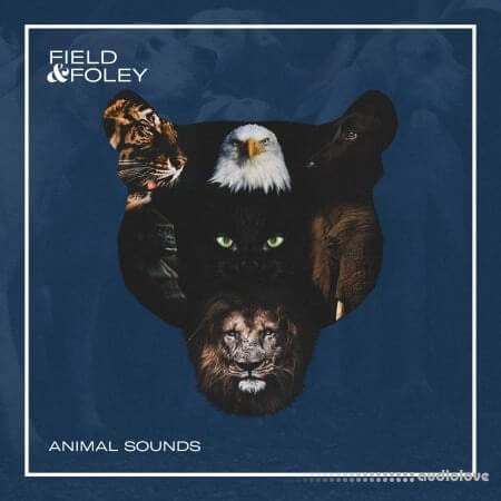 Field and Foley Animal Sounds