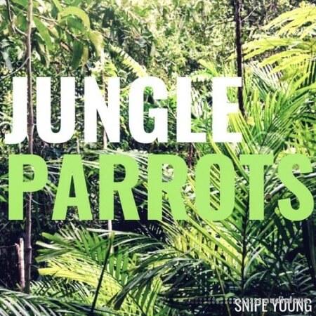 Snipe Young Jungle Parrots WAV