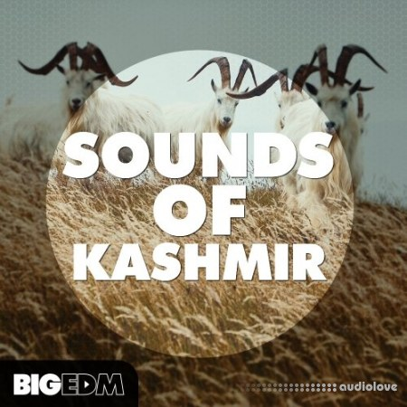 Big EDM Sounds Of Kashmir WAV MiDi Synth Presets