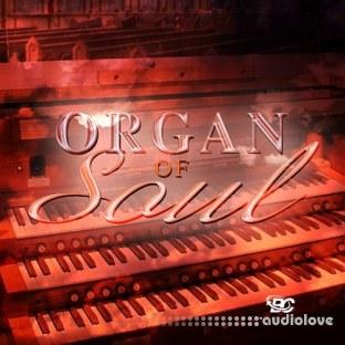 Big Citi Loops Organ Of Soul