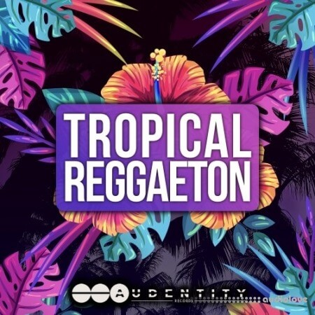 Audentity Records Tropical Reggaeton WAV MiDi Synth Presets