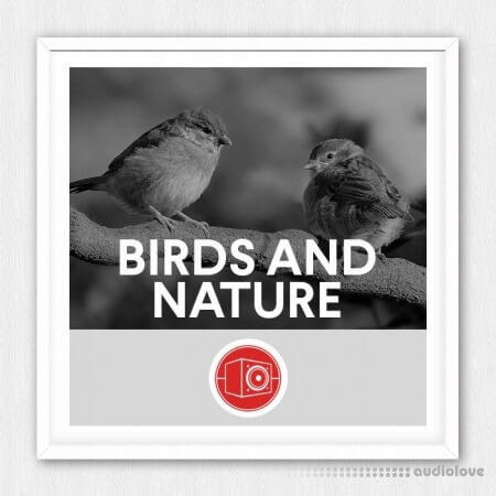 Big Room Sound Birds and Nature WAV