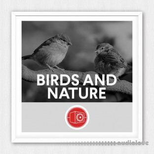 Big Room Sound Birds and Nature