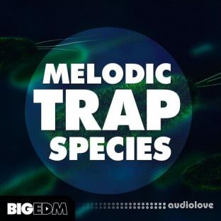 Big EDM Melodic Trap Species