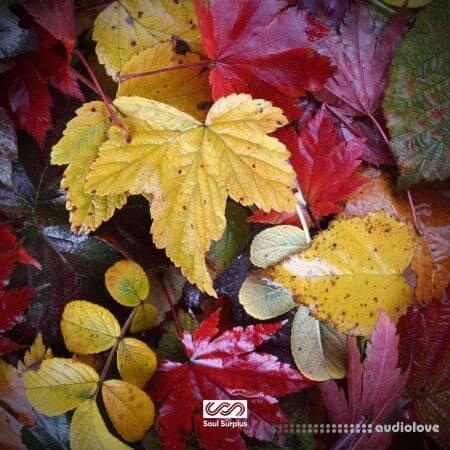 Soul Surplus Autumn Bliss